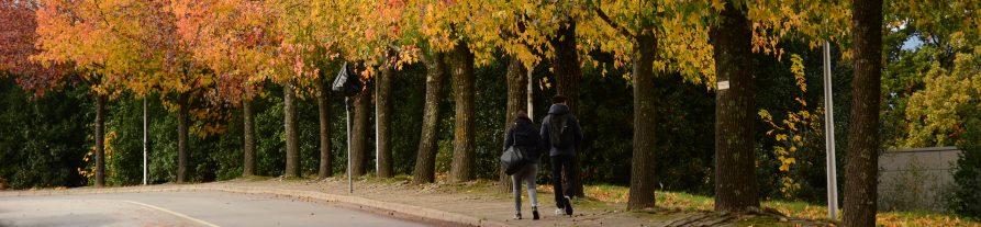Estudantes a caminhar no Campus da UTAD